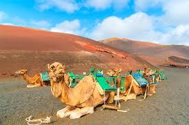 viaje de estudios a Lanzarote